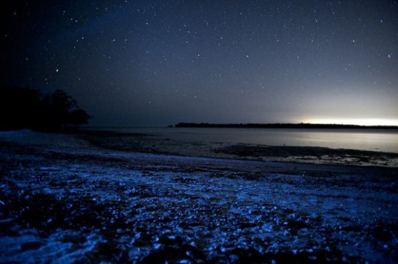 Glowing Blue Waves Explained glowing-waves-bioluminescent-ocean-life-explained-white-horse-key_50163_600x450-580x385.jpg