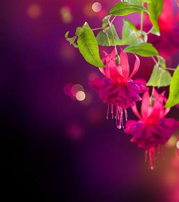 Las flores más hermosas del mundo (Escribe tu mensaje) - Imágenes con espacio para personalizar y escribir mensajes de amor, poesias o frases - Aretes de India