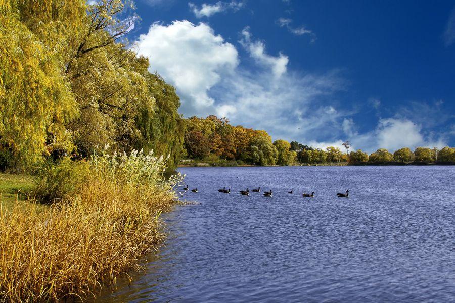 24. Fall in High Park by Nazar Zhovnirchyk