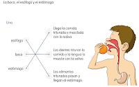 http://primerodecarlos.com/SEGUNDO_PRIMARIA/tengo_todo_4/root_globalizado4/libro/6169/ISBN_9788467808803/activity/U02_077_01_AI/visor.swf