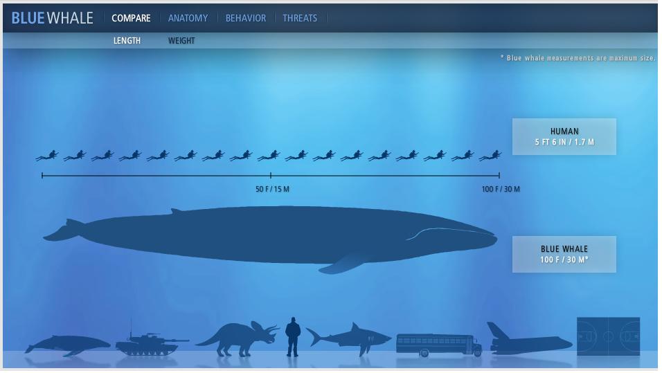 FMP: Blue Whale Interactive