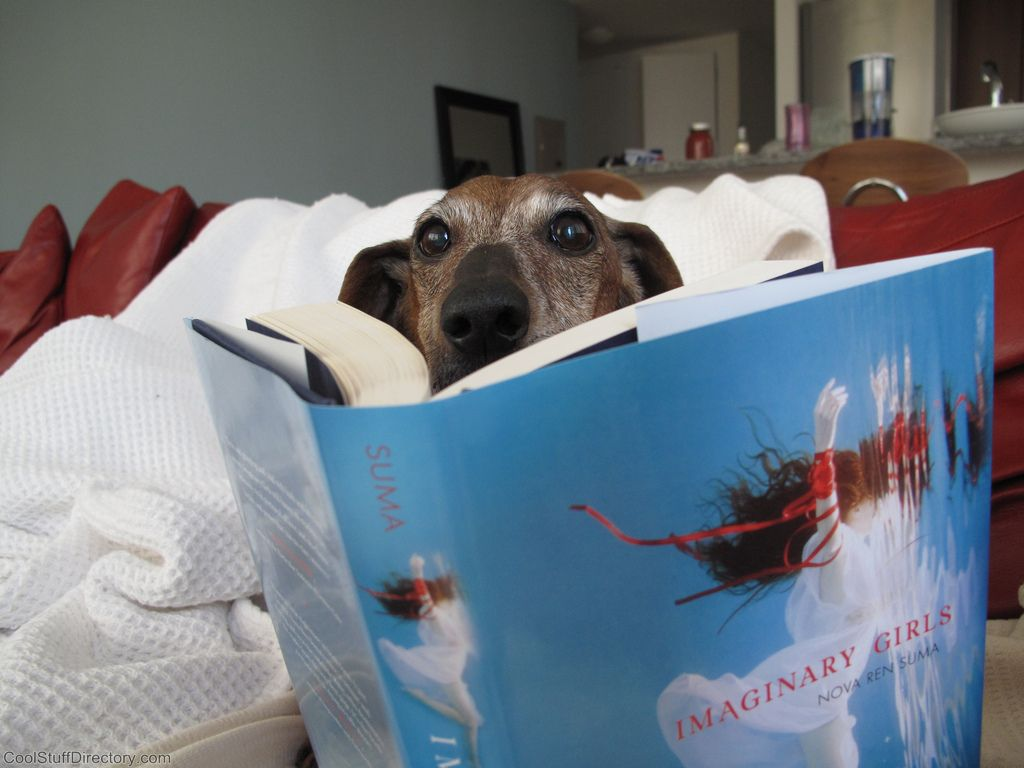 37. Wiener Dogs Reading Books - Scarlet reading Nova's Imaginary Girls by czilka