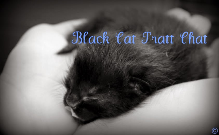 Black Cat Pratt Chat
