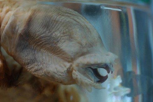 Makhluk Aneh Dan Mengerikan Ditemukan Di Antartika! [ www.BlogApaAja.com ]