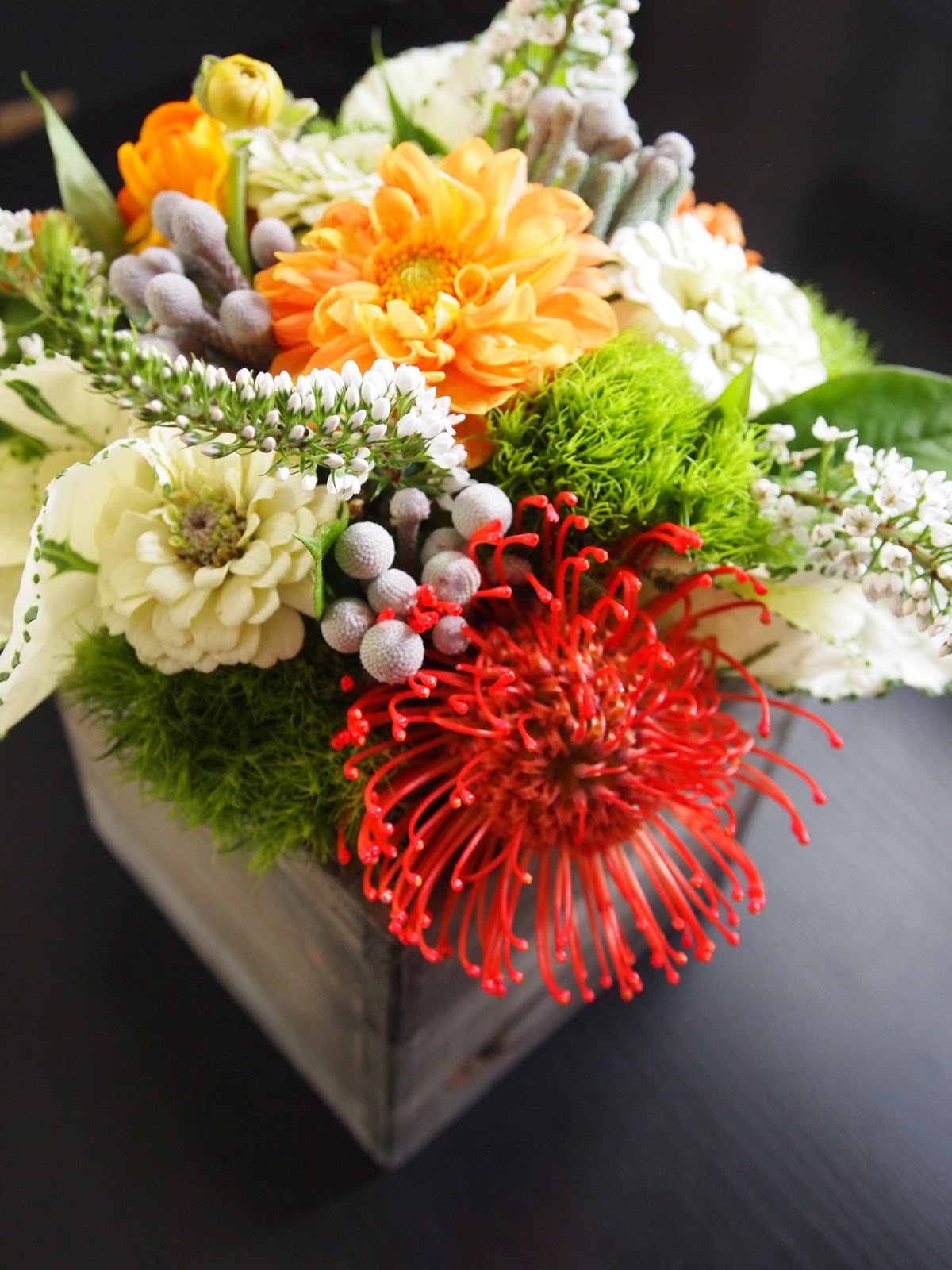 Pincushion Protea Ever Ours Events: Octo...