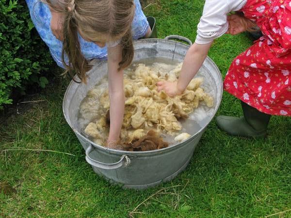 cara mencuci bulu domba