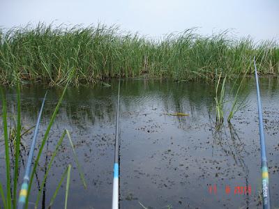 pescuit la tara