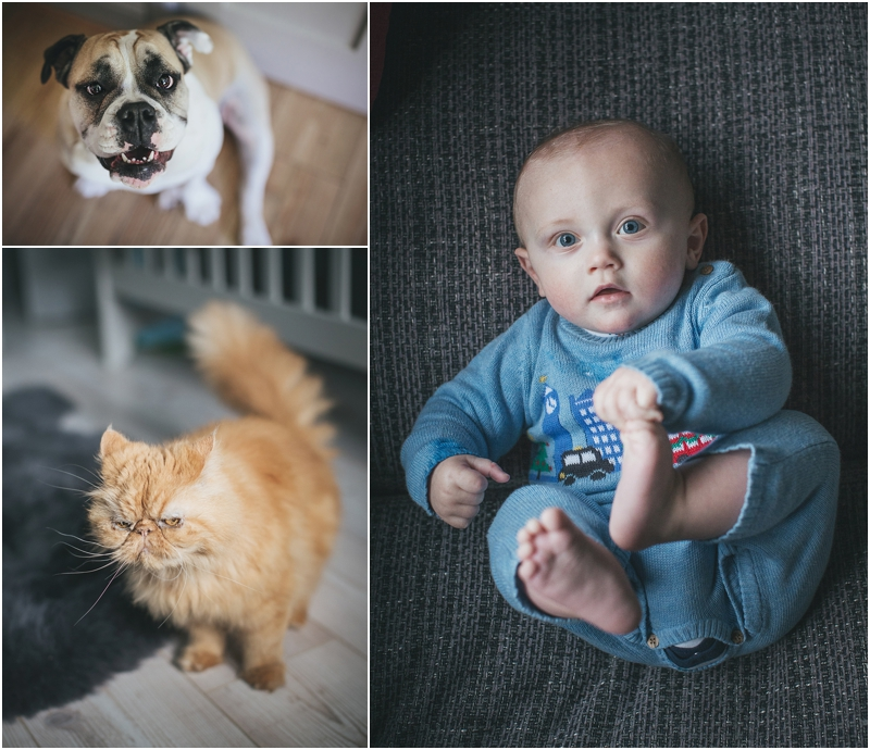 A baby boy and a cat and a dog