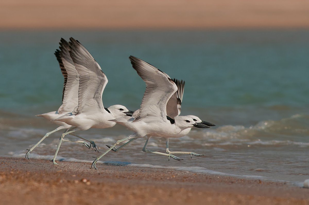 shore bird photography tips