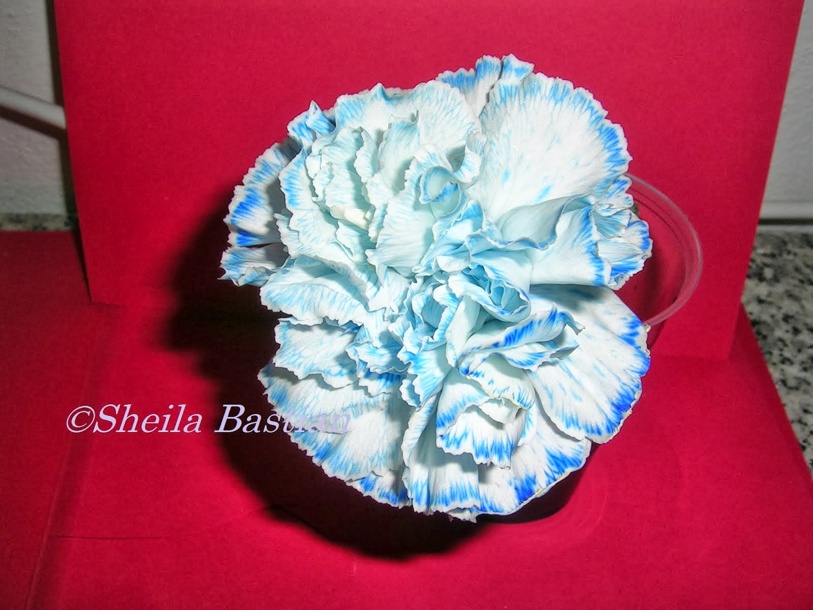 A carnation left in blue ink