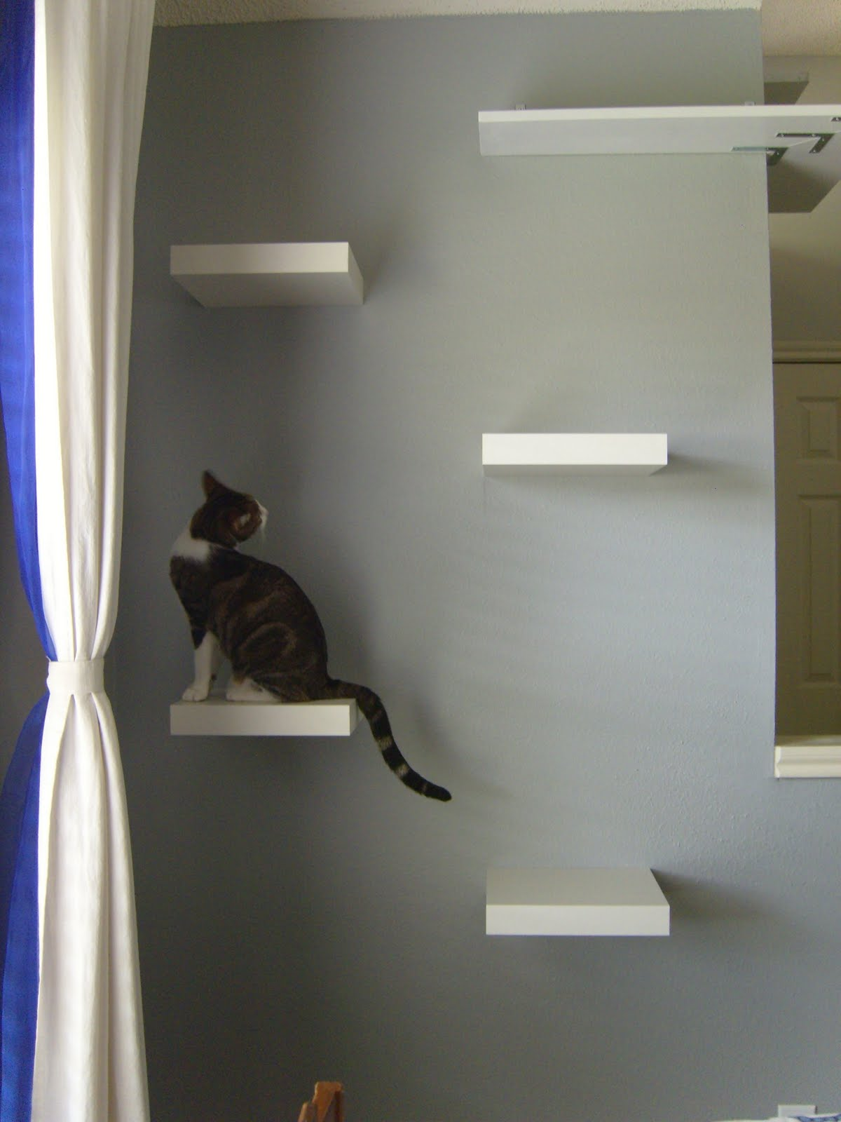 armstrong drive cat stairs in the dining room. Black Bedroom Furniture Sets. Home Design Ideas