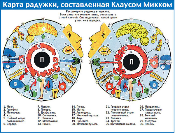 В какой аптеке можно купить капли молот тора в москве является