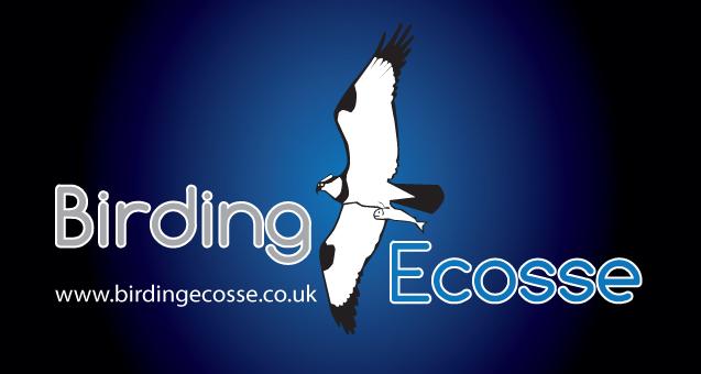 Birding Ecosse