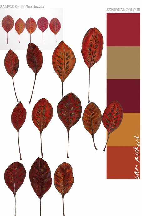 Planet Sam: Colour from the Season - Smoke Tree Leaf Red