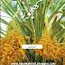 Kajoor Ki Kasht (Cultivation of Dates) Booklet In Urdu