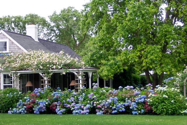 The Enchanted Home: 30 heavenly reasons why I love hydrangeas!