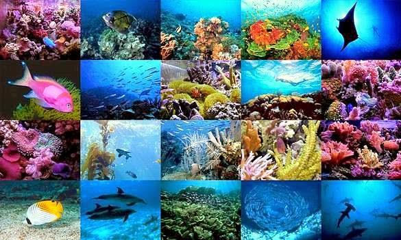 Sambutan Hari Lautan Sedunia - World Oceans Day