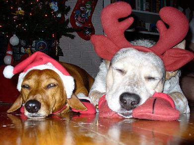 Associazione alex cani e gatti natalizi aspettando for Animali a natale