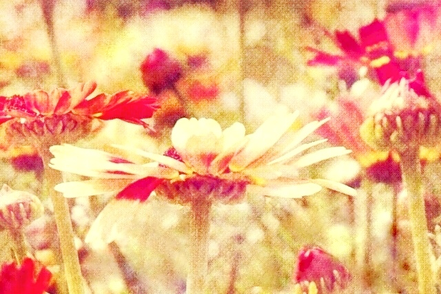 Stylized photograph of flowers.