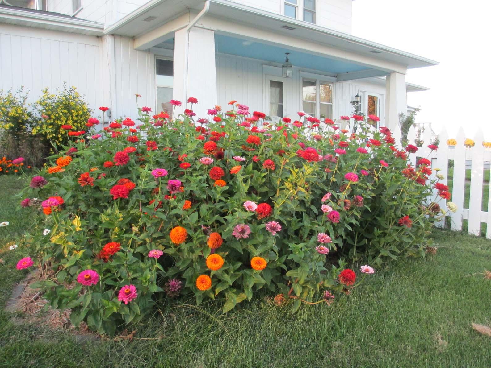 Garden fancy a late summer ode to annuals a late summer ode to annuals izmirmasajfo