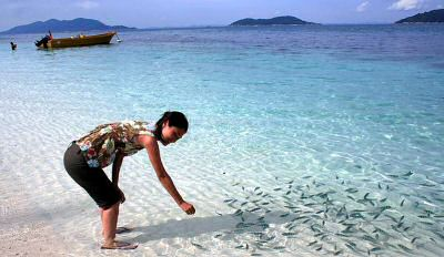Feeding the coral fisches at the beach of Rawa Island