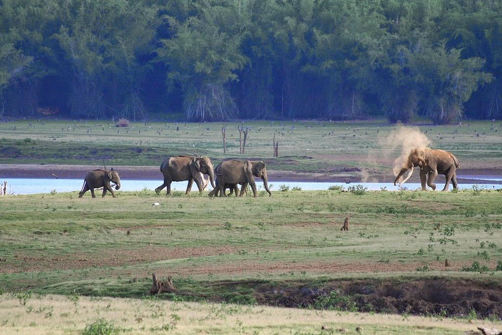 Elephant family in Kabini River banks