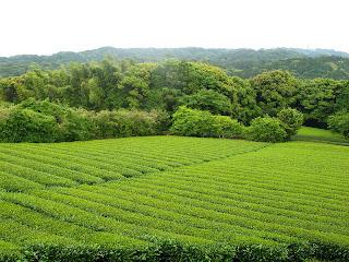 agrotóxico, veneno, comida, plantação