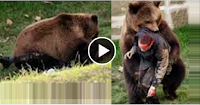 Bear Kills a Man - Bear Attack 2014