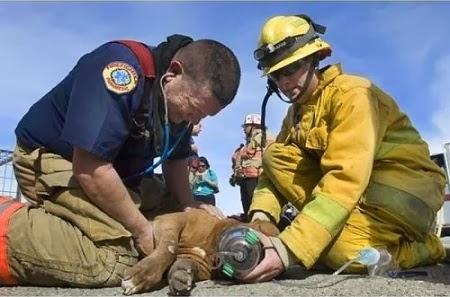Lista de las 10 Imagenes Mas Conmovedoras con Animales
