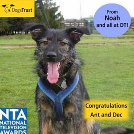 http://www.dogstrust.org.uk/rehoming/dog/1109397/noah#.Ut_5JLTFIr0