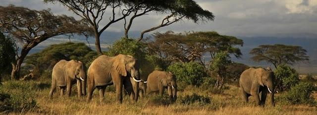 Tops 10 des activités à Nairobi
