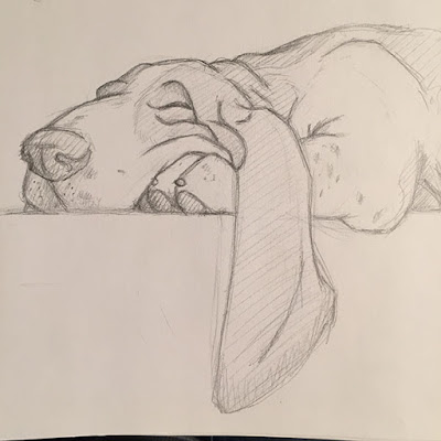 Pencil drawing sketch of sleeping basset hound