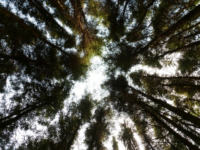 laying down looking up through trees