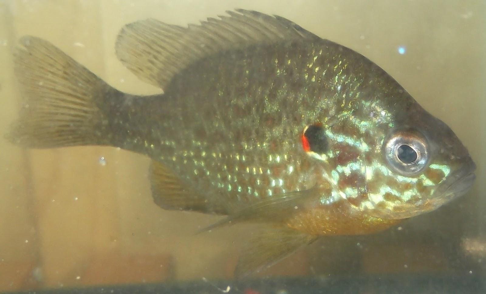 2012 fish big year more from the minnow aquarium