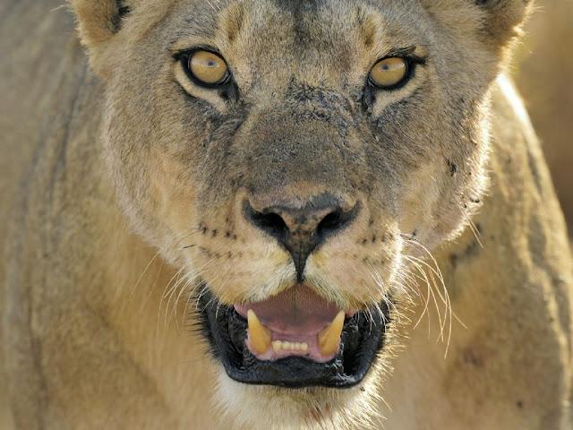 fotos-de-leoa