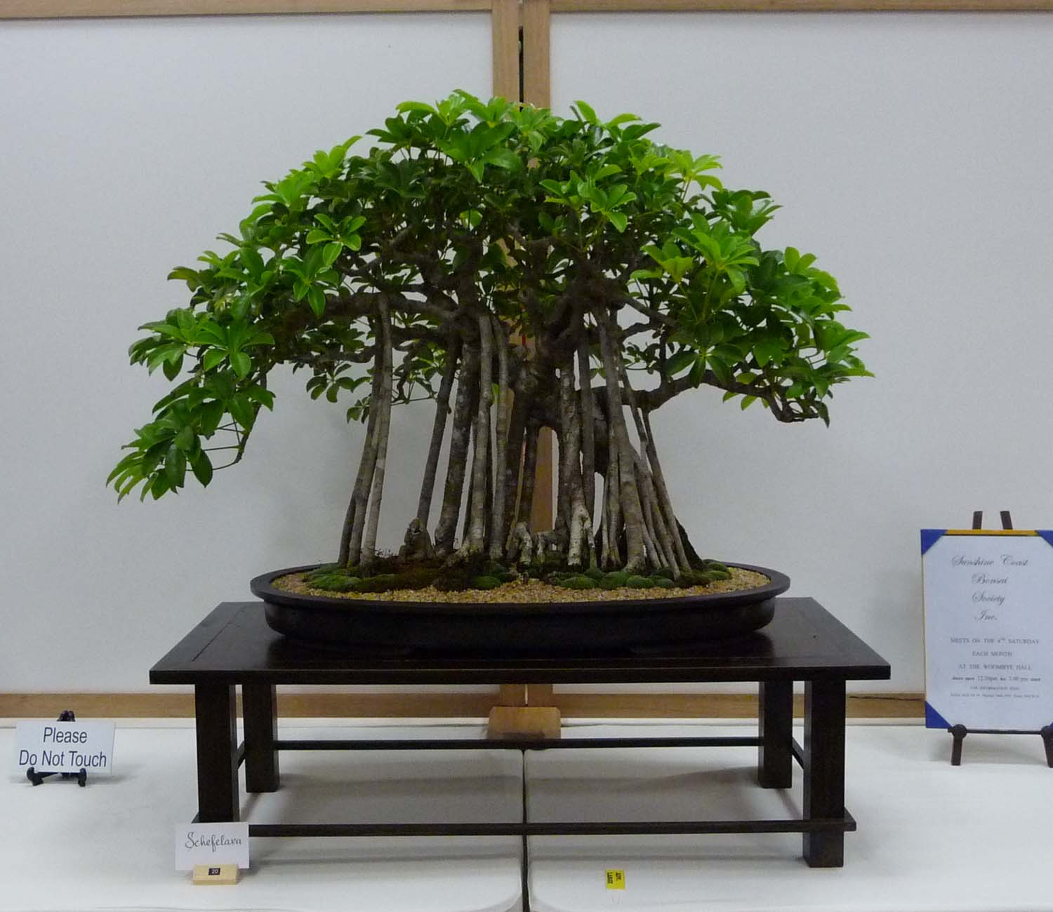 Redlands Bonsai Society October 2015