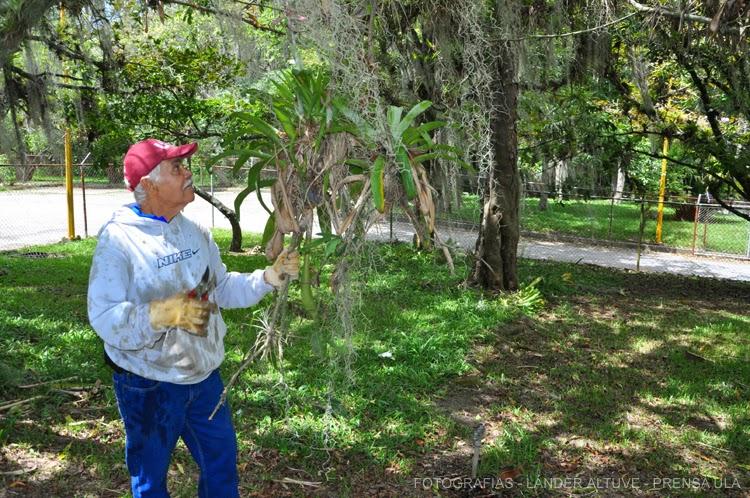 Los jardines de la Facultad de Ciencias Forestales y Ambientales fueron objeto de limpieza. (Foto: Lánder Altuve)