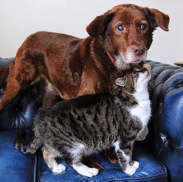 kisah persahabatan anjing dan kucing