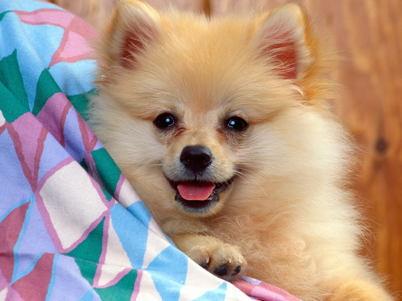 baby dog pictures dogs wallpaper hd animal wallpapers