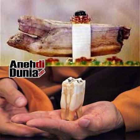 gigi yang dipercaya gigi buddha