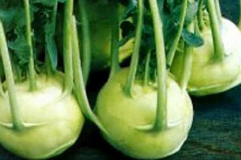 плод капусты кольраби