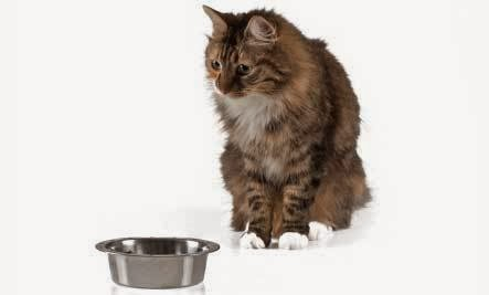Cat Nutritionist Best Weight Loss Cat Food