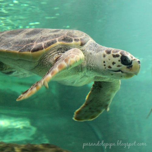 pasandolopipa : tortuga del zoo de madrid
