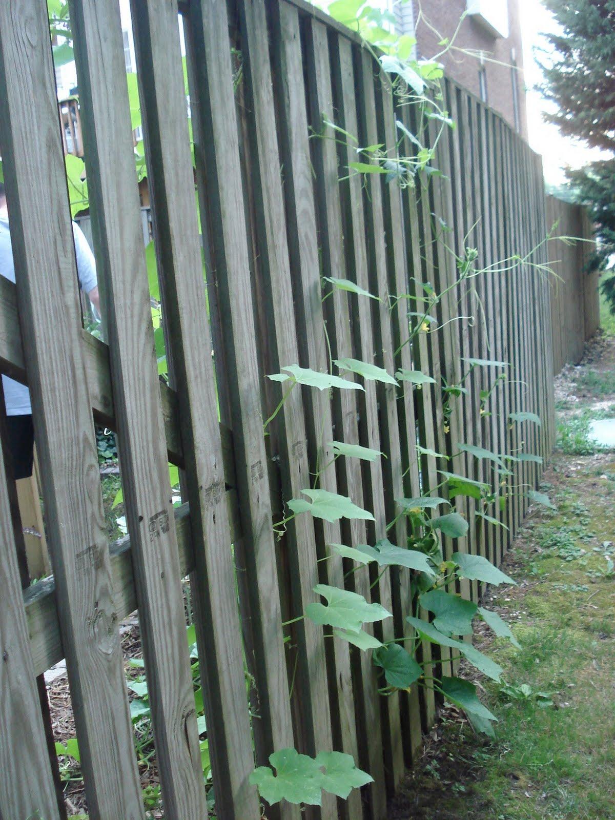 Bumble Lush Garden Almost Wordless Wednesday