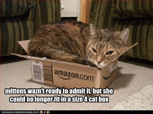 Why Are Cats Obsessed With Boxes