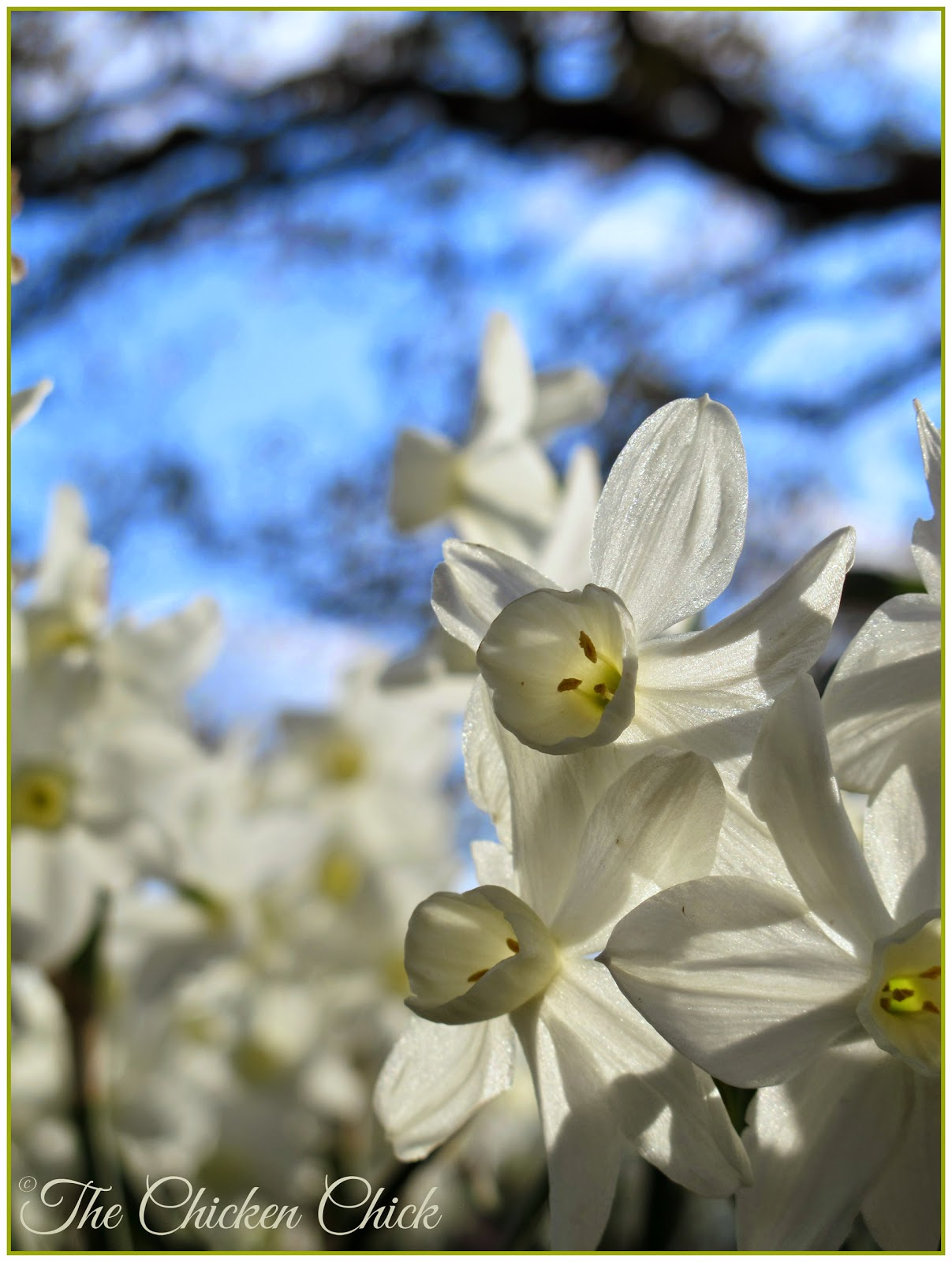 Spring beauty at The Garden Home Retreat in Arkansas