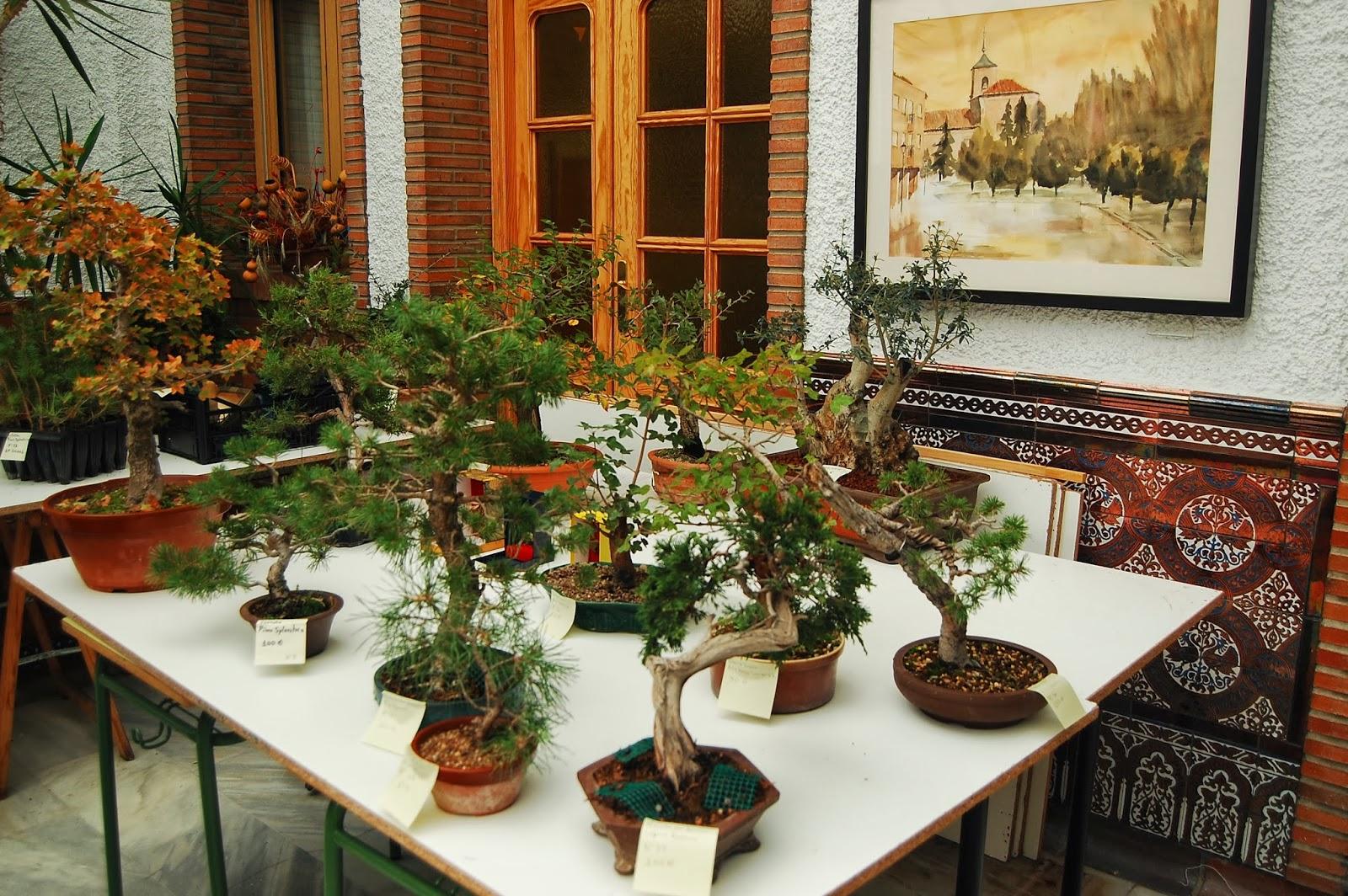 Am bonsai v concurso de prebonsai gri n las fotos el for Vivero grinon