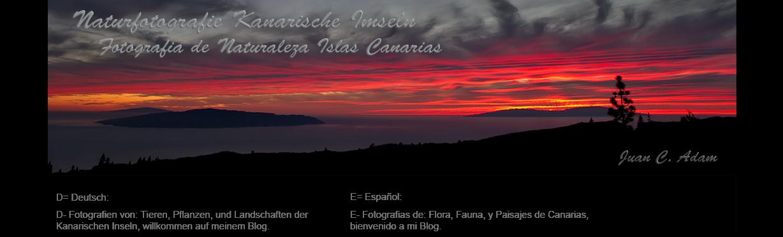 Naturfotografie Kanarische Inseln