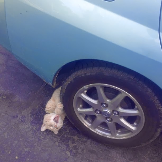 Funny cats - part 90 (40 pics + 10 gifs), dramatic cat pretending he's being run over by a car
