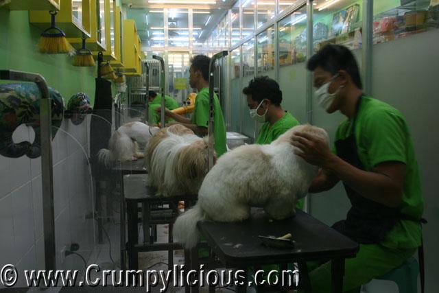 pet passion dog shop